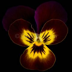 Flora-Skinycurl-111117-0451