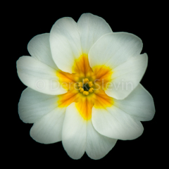 M1-White-Lightening-010718-3676