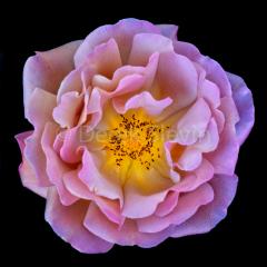 Enchanted-Flower-010217-2875