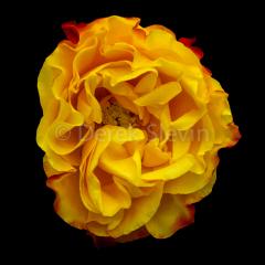 Warm-Embrace-031718-1865