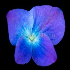 Summer-Wonderland-Sun-Drop-Butterfly-Effect-061018-7078