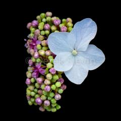 Summer-Wonderland-Sun-Drop-Candy-Delight-061018-7595