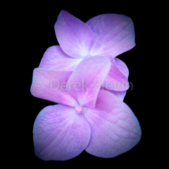 Summer-Wonderland-Sun-Drop-Fluttering-Smiles-060818-6806